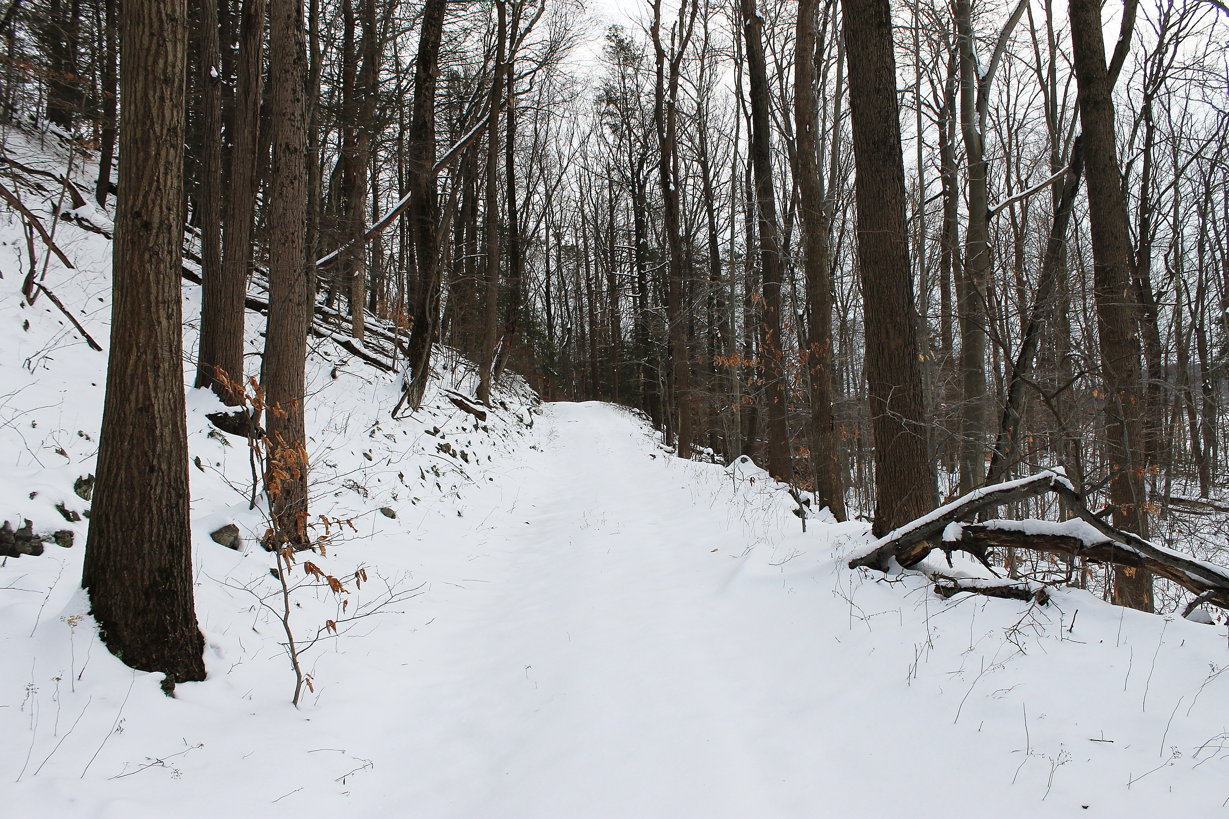 snowy forest trails   Scott's Place...Images and Words