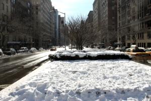 snowy Park Ave